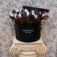 White_Purple Tulip