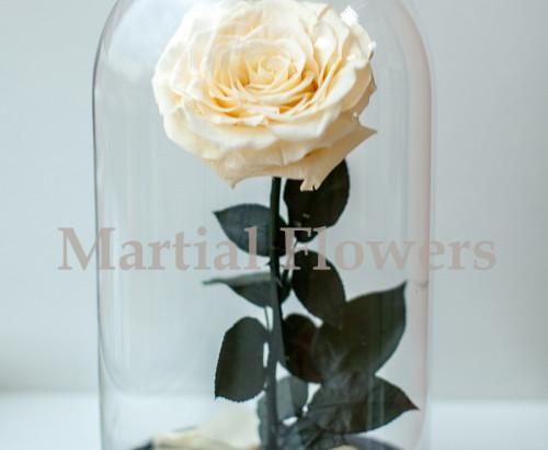 Кремовая роза в колбе 27 на 15 см KING
