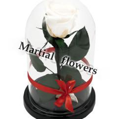 Белая роза в колбе 16 на 10 см MINI
