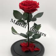 Роза в клоше 31 на 19 см Deluxe
