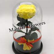 Желтая роза в колбе 27 на 15 см KING