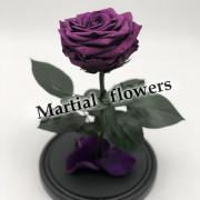 Сиреневая роза в колбе 27 на 15 см KING