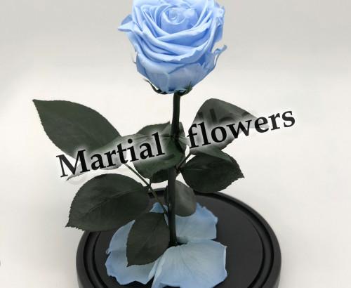 Голубая роза в колбе 27 на 15 см Standart