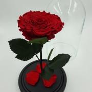 Красная роза в колбе КИНГ