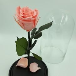 Розовая роза в колбе 27 на 15 см Standart