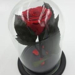 КРасная роза мини