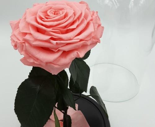 Розовая роза в колбе 27 на 15 см KING