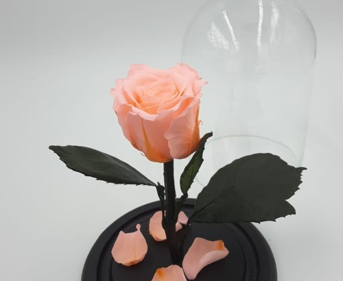 Кремовая роза в колбе 16 на 10 см MINI