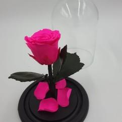 Фуксия роза в колбе 16 на 10 см MINI