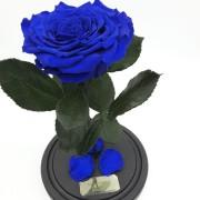 Синяя роза в колбе 27 на 15 см KING