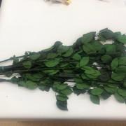 Стабилизированный стебель розы