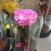 Фуксия роза в колбе 27 на 15 см KING