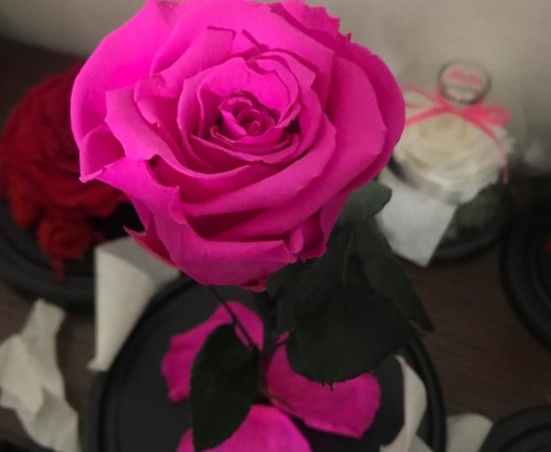 Фуксия роза в колбе 27 на 15 см Standart