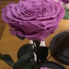 Пудровая роза в колбе 27 на 15 см KING