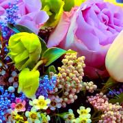 хамелациум, хелеборус, солидаго, роза, тюльпан, озотамнус, лента, коробка