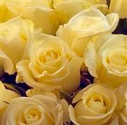 роза, оазис, коробка «М» в ассортименте